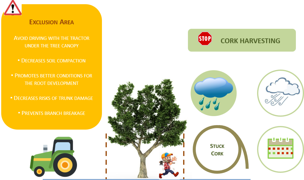 Recommendations for reducing the risk of damage in cork oak trees
