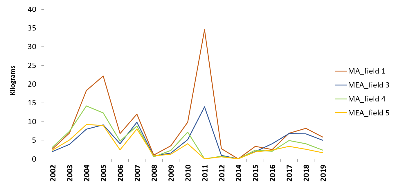 Average anual production (pine cones weight/ tree) between 2002 and 2019 with manual and mechanical harvesting