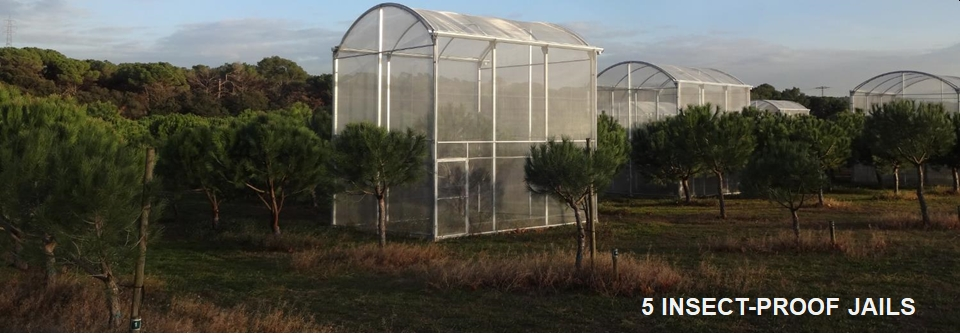 Insect-proof cages