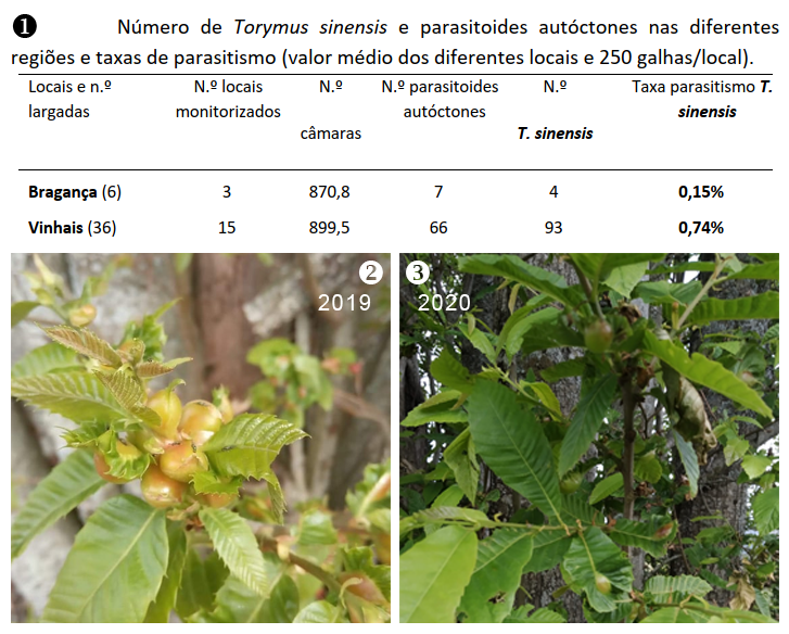 Presence of T. sinensis in gall samples