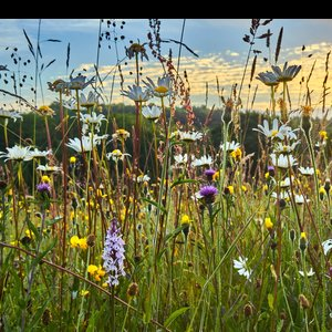 Biodiverse meadow