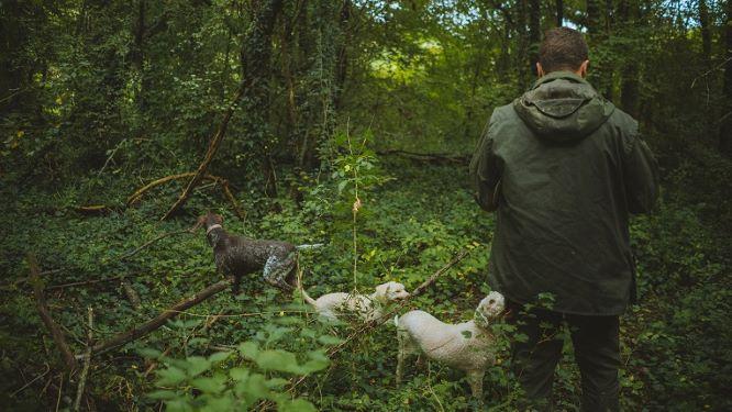 Karlić tartufi: Truffle hunting