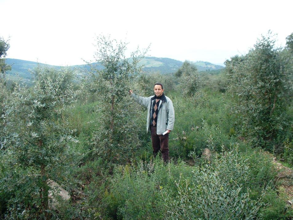 Abdelhamid Khaldi