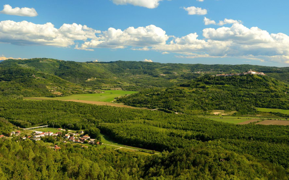 Motovun forest landscape