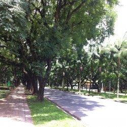 The very green University City, next to Jaguaré Creek