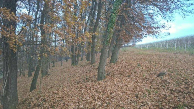 Italian deciduous forest