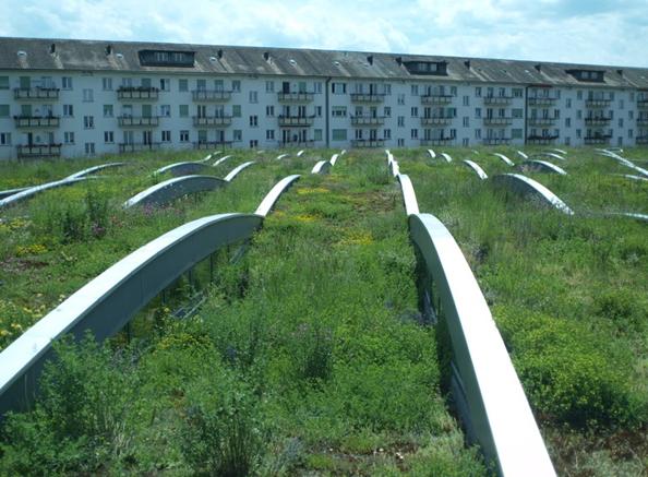 """Green roof on Tram depot Wiesenplatz in Basel, project """"Meadow carpet"""". Author: Stephan Brenneisen"""