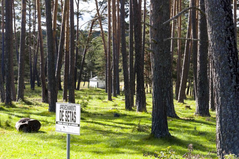 Regulated area