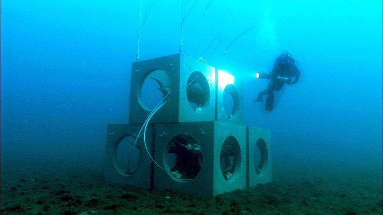 Artificial reefs - Prado bay (3)