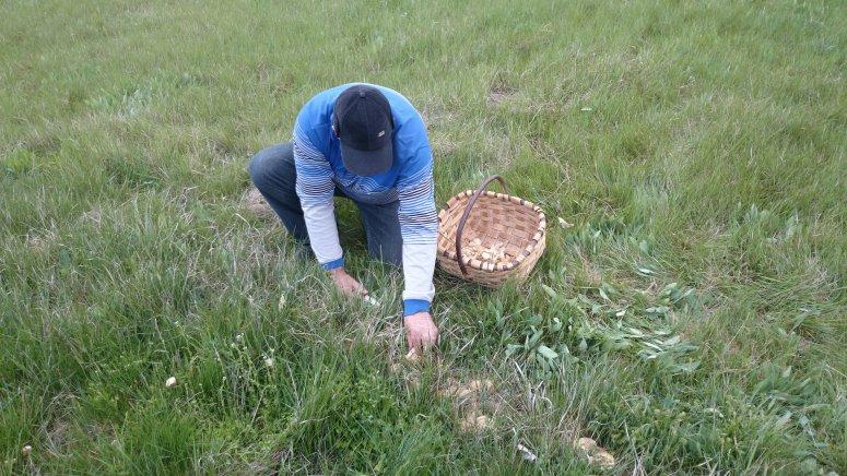 Wild mushroom picker.