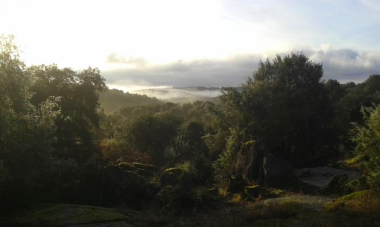 Holm oak forest