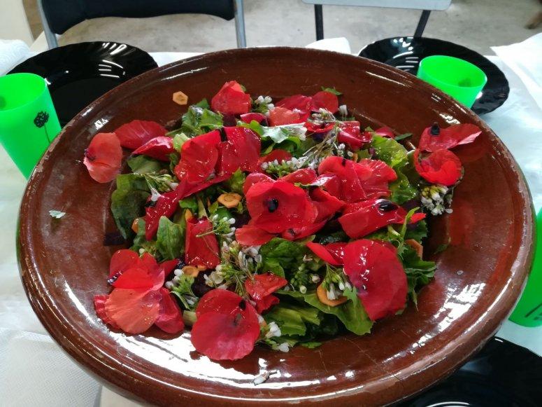 Wild edible herbs salad