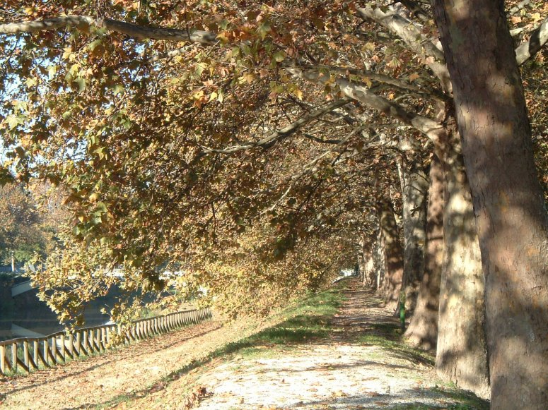Biophysical analysis of public trees in Padova: biodiversity and ecosystem services