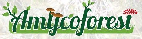 Amycoforest