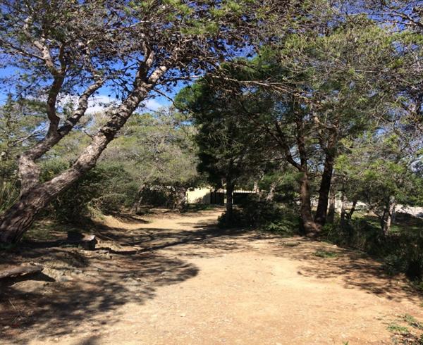Natural Aleppo Pine forest (Djebel Zaghouen- Zaghouen)