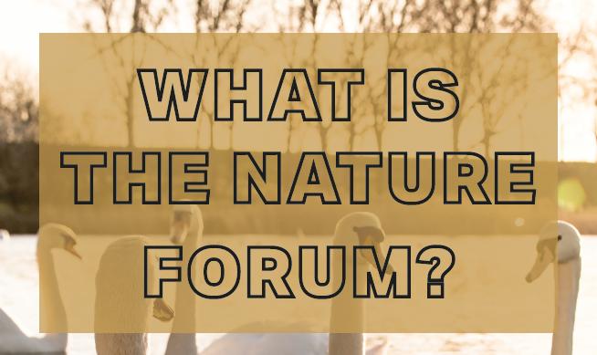 Nature Forum Marketing Flyer