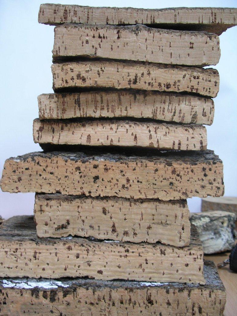 Core samples of cork