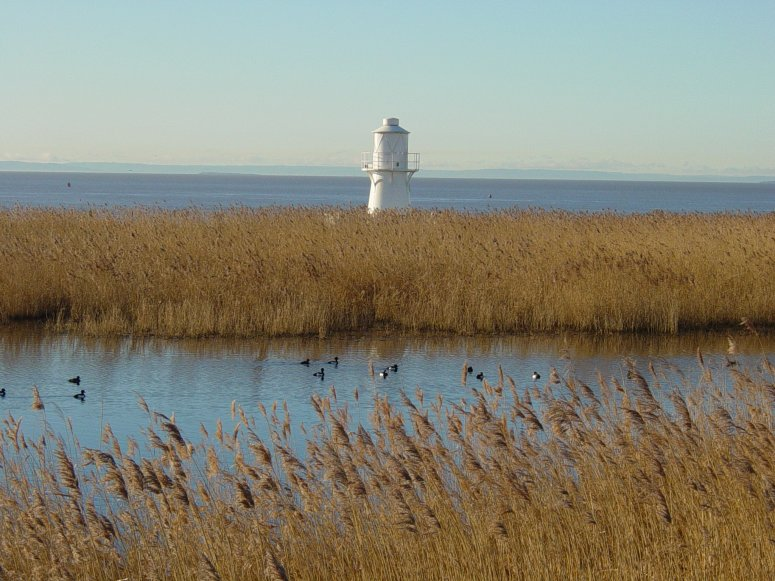 Reed beds at Newport Wetlands - credit to Natural Resources Wales