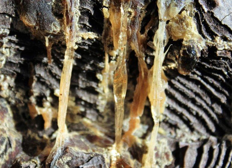 Natural Resin