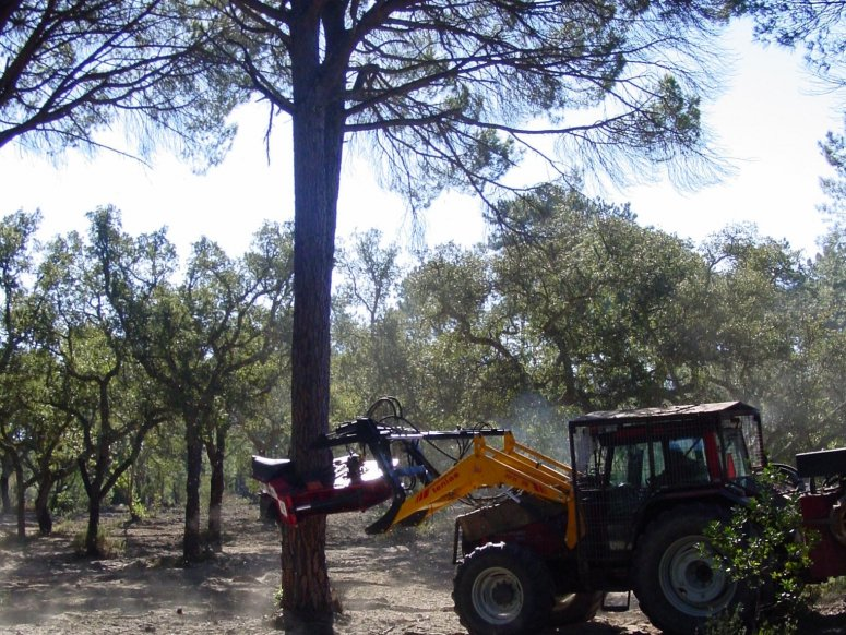 Tree shaker for cone harvest