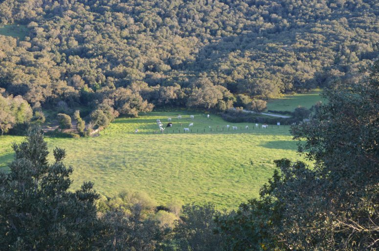Multi-functional system with cork oaks in Aglientu (Sardinia)