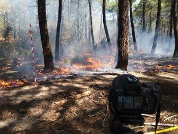 Prescribe burning in the experimental plot (Soria, Spain)