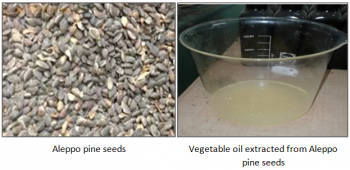 Aleppo pine seeds & Vegetable oil extracted from Aleppo pine seeds