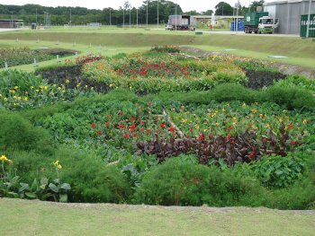 A view of the filtration gardens