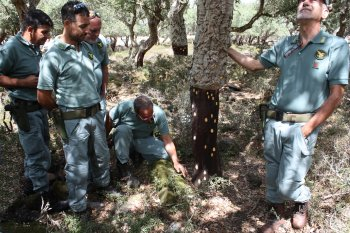 Lymantria egg masses on a cork oak tree and CFVA personnel in charge of monitoring