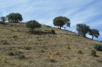 Wild truffle producing mediterranean landscape
