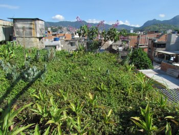 Green roof at the Arará community in the heart of a highly built-up and paved area