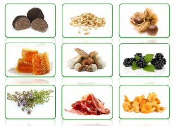 Edible non wood forest products