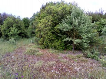 Natural habitat of Tuber aestivum in NW Greece