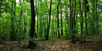 Mixed forest of northern Croatia