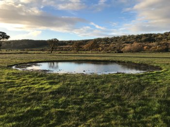 Lapwing scrape in Weston Moor, Gordano - credit to Avon Wildlife Trust
