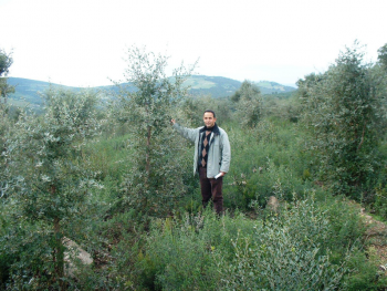 Cork oak plantation - Tunisia