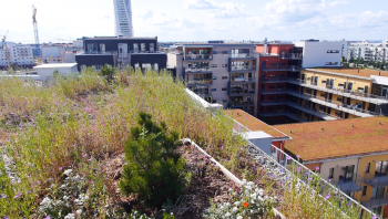 Green roof terrace view