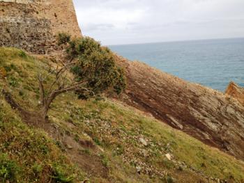 Anthyllis barba-jovis from Tabarka region, North-West of Tunisia