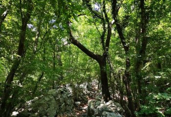Natural habitat of summer truffle