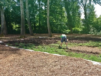 Mulching the lawn with wood chips to create a forest floor