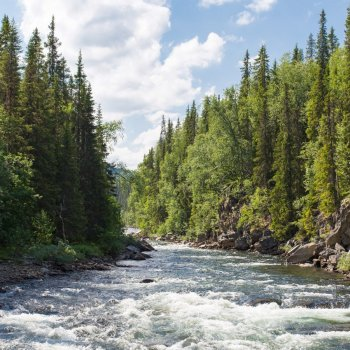 NATURAL CLIMATE SOLUTIONS CAN HELP BUSINESSES MEET CLIMATE GOALS