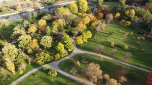 Surviving the City - Urban Forests for nature-based health and happiness