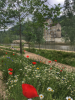 Wildflowers at Bath Quays Waterside Park - Credit to B&NES